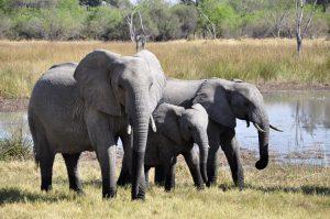 elephant-55255_960_720